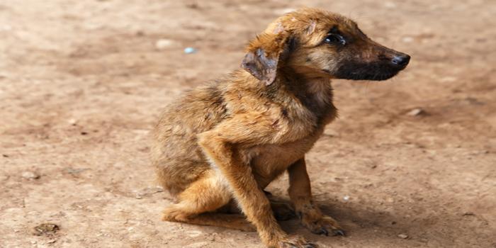 תושב אילת חשוד כי שפך מים רותחים על שלושה כלבים השייכים לשכנו