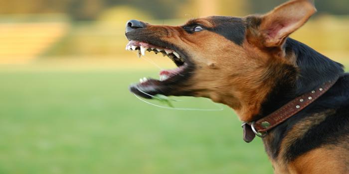 הכלב שלי נשך – מה העונש?