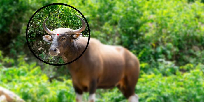 נעצרו חשודים בציד בלתי חוקי של חיות בר