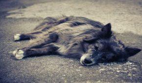 עבירת היזק לבעלי חיים