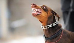אי נקיטת אמצעי זהירות בחיה – משמעותה והעונש בצידה