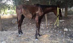 תועדו מתעללים בסוס בחגיגות עיד אל-פיטר