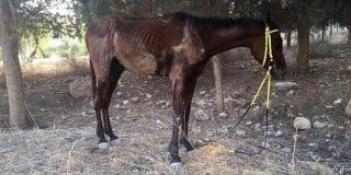 נער בן 12 חשוד כי התעלל בסוס ביער ראש העין