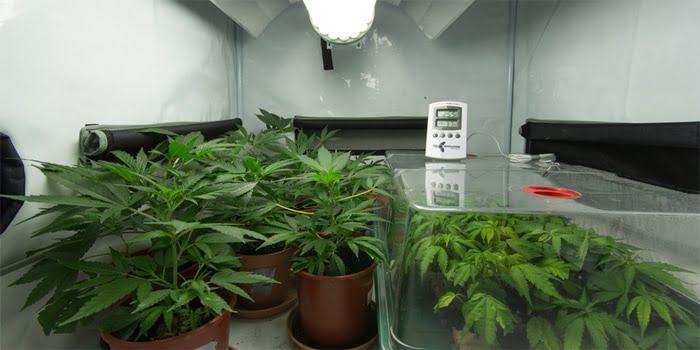 עונש על גידול סמים במעבדה