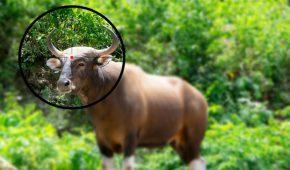 עבירת ציד בלתי חוקי של חיות בר – משמעותה והעונש בצידה