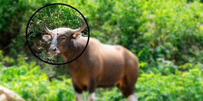 עבירת ציד בלתי חוקי של חיות בר - משמעותה והעונש בצידה