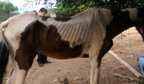ברמת גן פונתה חוות סוסים בלתי חוקית שבעלי החיים בה סבלו מפגיעות פיזיות שונות ומתת-תזונה